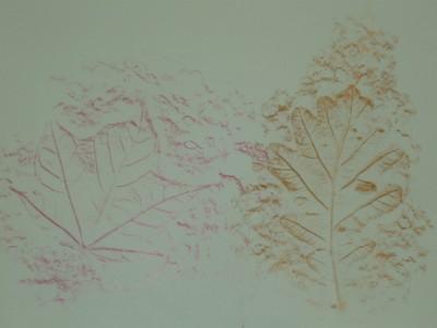 Leaf-rubbing