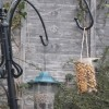 Easy to make high energy bird feeder