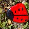 Read more about the article Painted ladybird stones